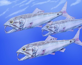 Aulopiformes - Reconstruction of Enchodus petrosus from the Cretaceous of the Western Interior Seaway (Enchodontoidei: Enchodontidae)