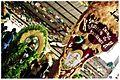 Encontro de Maracatus e Carnaval Mesclado - Carnaval 2013 (8495634570).jpg