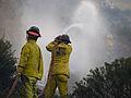 FEMA - 37464 - Fire crew working a wildfire in Colorado.jpg