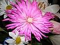 FLOWERS (2) (2292646298).jpg