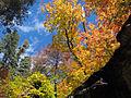 Fall Colors in West Fork - 2010 (5179049352).jpg