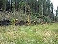 Fallen trees, Kielder Forest - geograph.org.uk - 213115.jpg