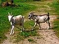 Farm - panoramio.jpg