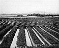 Farmers of forty centuries - Looking across fields ridged for a winter crop.jpg