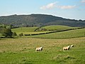 Farmland near Crosshill - geograph.org.uk - 258342.jpg
