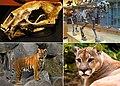 Felidae montage.jpg