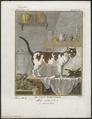 Felis catus domesticus - 1700-1880 - Print - Iconographia Zoologica - Special Collections University of Amsterdam - UBA01 IZ22100274.tif