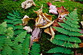 Ferns-and-moss-forest - West Virginia - ForestWander.jpg