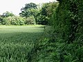 Field edge to the N of Fox Holt Road - geograph.org.uk - 853078.jpg