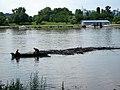 Fishing flotsam from the Sava river, Belgrade, Serbia. - panoramio.jpg