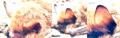 Fledermaus (Schmallenberg) Analyse.png
