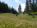 Fleurs , Suhard , 19.07.09 - panoramio.jpg