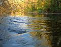 Flickr - Nicholas T - Pool Wildlife Sanctuary (4).jpg