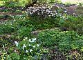 Flickr - brewbooks - Carla and George's Woodland Garden (2).jpg