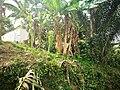Flora de Tocaña.jpg
