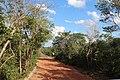 Flora do Parque Nacional Serra da Capivara (0553).jpg