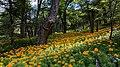 Flora of Bariloche.jpg