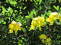 Flores en el Jardín Botánico de Viña del Mar 23.JPG