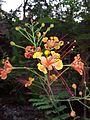 Flower1226.jpg