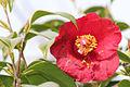 Flower 9522 (9498679161) (3).jpg