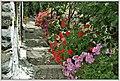 Flowers (35168161040).jpg