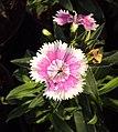 Flowers - Uncategorised Garden plants 296.JPG