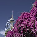 Flowers and tower (44203116842).jpg