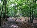Footpath through woodland at Arne nature reserve - geograph.org.uk - 1769185.jpg