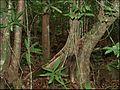 Forêt du Mont Choungui, Mayotte.jpg
