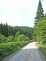 Forest road to Lewisburn picnic site, Kielder Forest - geograph.org.uk - 210194.jpg