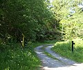 Forestry track above Penmachno - geograph.org.uk - 1335782.jpg