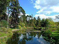 Fota Gardens and Arboretum - geograph.org.uk - 768149.jpg