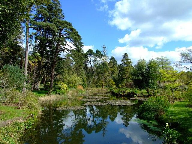 Fota Gardens and Arboretum - geograph.org.uk - 768149