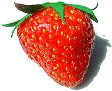 accessory fruit - wikipedia