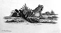 Frogs; from Roesel von Rosenhof; 1758 Wellcome L0001700.jpg