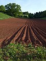 Furrows near Haccombe - geograph.org.uk - 1301888.jpg