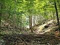 GER — BY — Landkreis Rosenheim — Gemeinde Aschau i.Chiemgau (Wasserfall Schoßrinn, Fernansicht) 2021.jpg