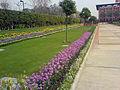 Garden JIIT.JPG