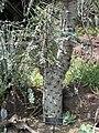 Gardenology.org-IMG 4430 hunt0904.jpg