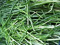 Garlic chives 2.jpg