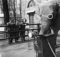 Gatto Del Buono Sereni Milano 1951.jpg