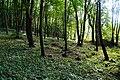 Gdańsk. Stary cmentarz w Brętowie, część północna - panoramio.jpg
