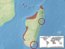 Geckolepis maculata distribution.png