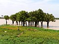 Girl in grass with trees and lake in the background, Burkina Faso, 2009.jpg
