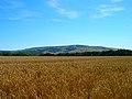 Golden Fields - geograph.org.uk - 203035.jpg