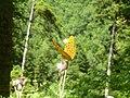 Greek butterflies1.jpg