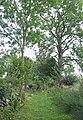 Green Lane, Nant Carfan, Ceredigion - geograph.org.uk - 565448.jpg
