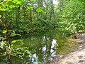 Grunewald - Hundekehlegraben - geo.hlipp.de - 42176.jpg