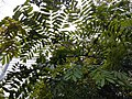 HK 中環 Central 遮打花園 Chater Garden flora green leaves n trees March 2020 SS2 05.jpg