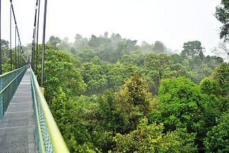 Central Catchment Nature Reserve - HSBC TreeTop Walk